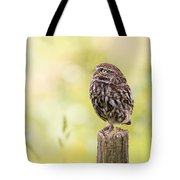 Little Owl Looking Up Tote Bag