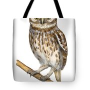 Little Owl Or Minerva's Owl Athene Noctua - Goddess Of Wisdom- Chouette Cheveche- Nationalpark Eifel Tote Bag