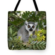 Little Ring-tailed Lemur Tote Bag