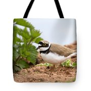 Little Ringed Plover Tote Bag