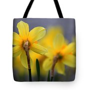 Little Suns. Evening Tote Bag