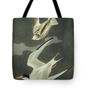 Little Tern Tote Bag