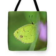 Little Yellow Butterfly Close-up Tote Bag