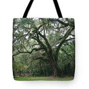 Live Oak 1 Tote Bag