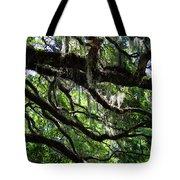 Live Oak Tote Bag
