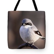 Loggerhead Shrike - Smokey Tote Bag