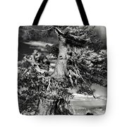 Lone Gnarled Old Bristlecone Pines At Crater Lake - Oregon Tote Bag by Christine Till