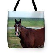 Lone Horse Tote Bag