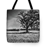 Lone Oak Tree In Black And White Tote Bag