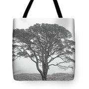 Lone Scots Pine, Crannoch Woods Tote Bag