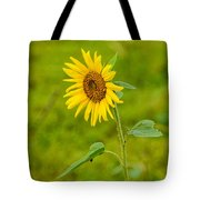 Lone Sunflower Tote Bag