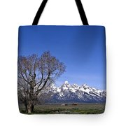 Lone Tree At Tetons Tote Bag