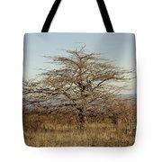 Lone Tree Tote Bag