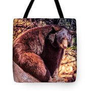 Lonely Black Bear On A Rock Tote Bag