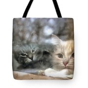 Lonely Kittens Behind The Glass Tote Bag