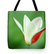 Lonely Lady Tulip Tote Bag