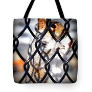 Lonely Squirrel  Tote Bag
