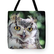 Long Eared Owl In The Trees Tote Bag