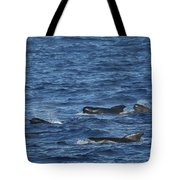 Long-finned Pilot Whales Tote Bag