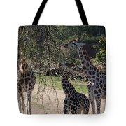 Long Necks Tote Bag