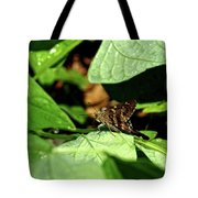 Long Tail Skipper Butterfly 1 Tote Bag
