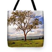 Long Tree Shenandoah Valley West Virginia  Tote Bag