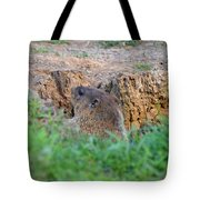 Looking For Intruders Tote Bag