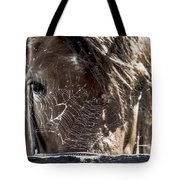 Looking Through The Web Tote Bag