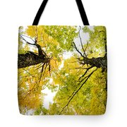 Looking Up At Fall Tote Bag