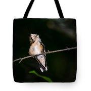 Looking Up - Hummingbird Tote Bag