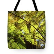 Looking Up To A Beautiful Sunglowing Fern In A Tropical Forest Tote Bag