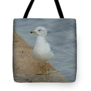 Lost Seagull Tote Bag