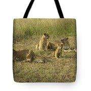Lotsa Lions Tote Bag