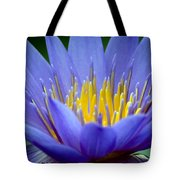 Lotus 6 Tote Bag