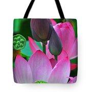 Lotus Blossoms  Tote Bag