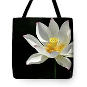 Lotus Reaching For The Sun Tote Bag