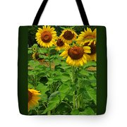 Louisa, Va. Sunflowers 3 Tote Bag