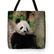 Lounging Giant Panda Bear With A Shoot Of Bamboo Tote Bag