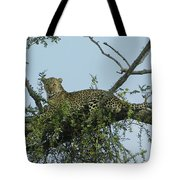Lounging Leopard Tote Bag