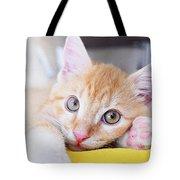 Lovable Cat Tote Bag