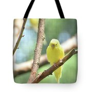 Lovable Little Budgie Parakeet Living In Nature Tote Bag