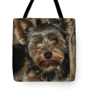 Loveable Yorkie  Tote Bag