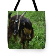 Lovely Billy Goat With Silky Black And Brown Fur Tote Bag