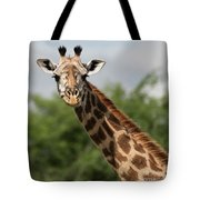 Lovely Giraffe In Tarangire - Square Format Tote Bag