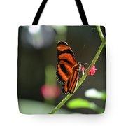 Lovely Orange Oak Tiger In The Spring Tote Bag