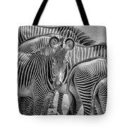 Lovely Stripes  7589bw Tote Bag