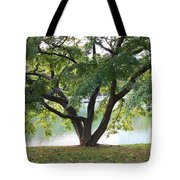 Lovely Tokyo Tree With Pond Tote Bag