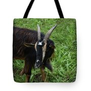 Lovely Up Close Look Into The Face Of A Pygmy Goat Tote Bag