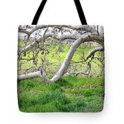 Low Branches On Sycamore Tree Tote Bag