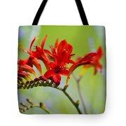 Lucifer Crocosima Flowers Tote Bag